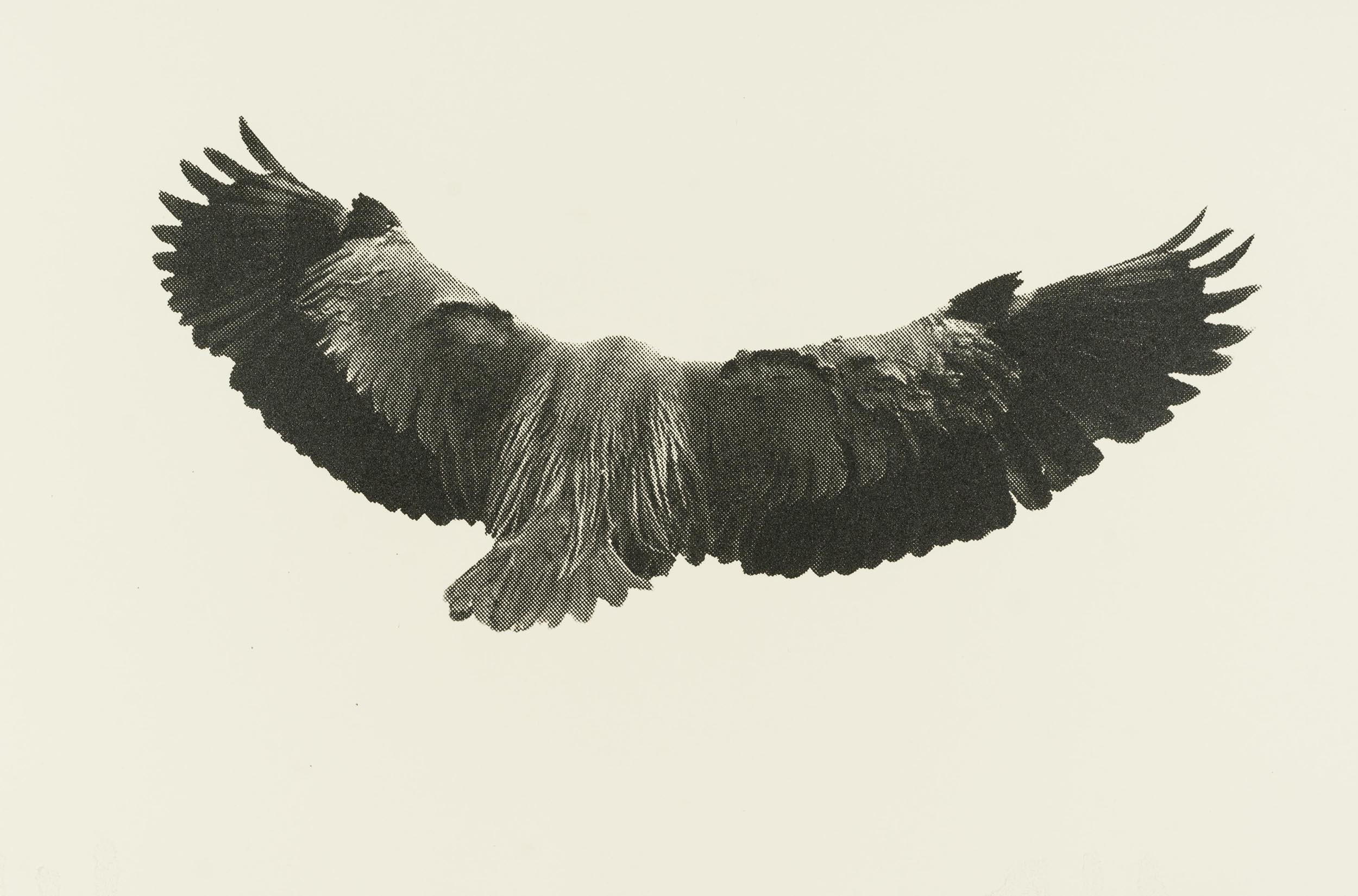 Eve-Biddle-Artworks-Dutchess-Heron-Alone-2017-02