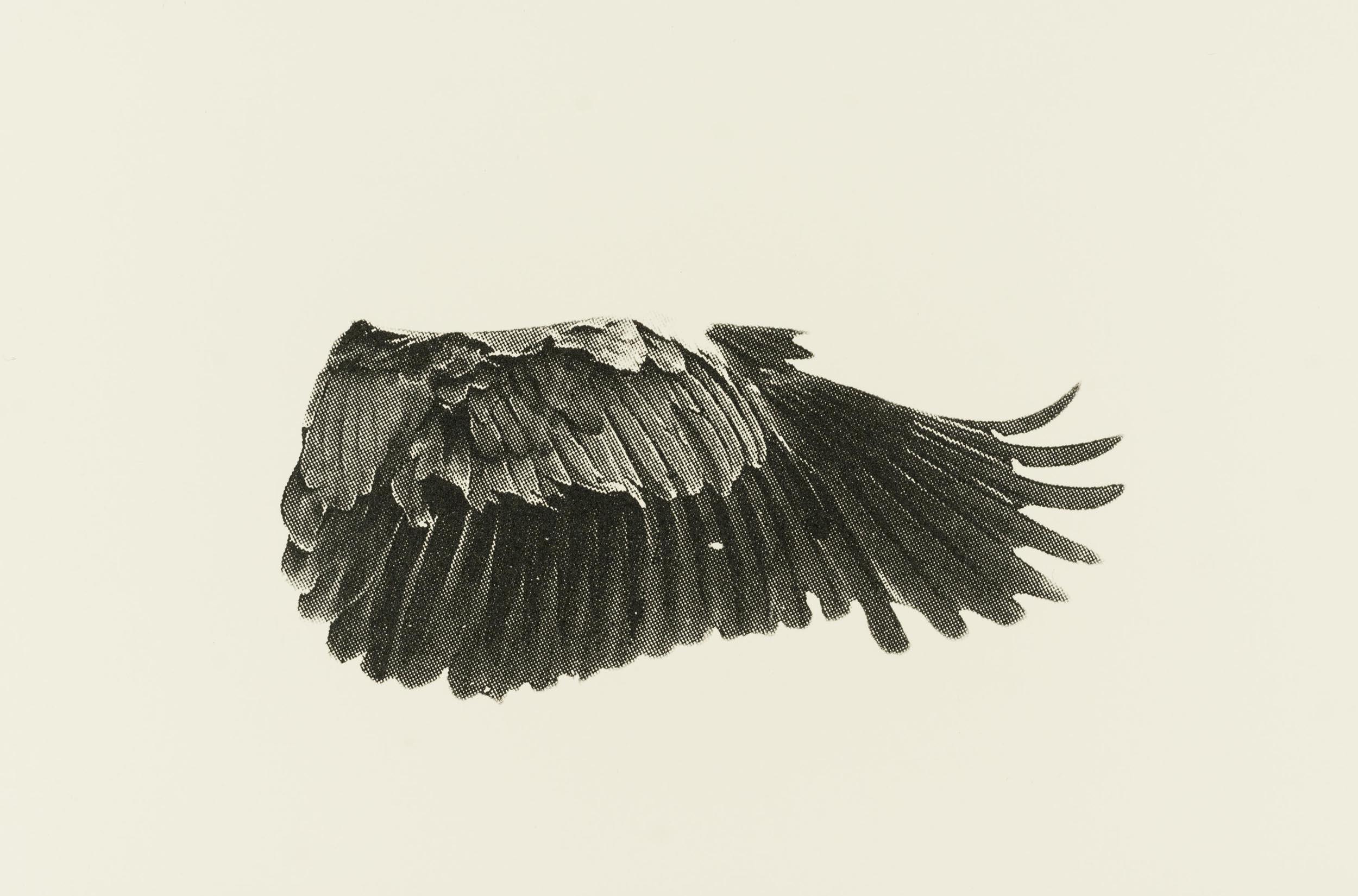 Eve-Biddle-Artworks-Dutchess-Heron-Wing-2016-01