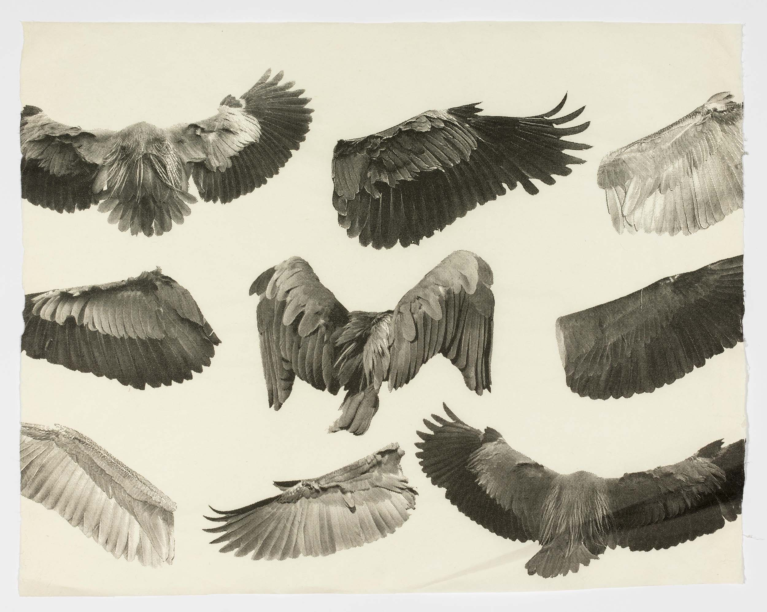 Silkscreen depicting the wings and wingspans of herons in multiple.