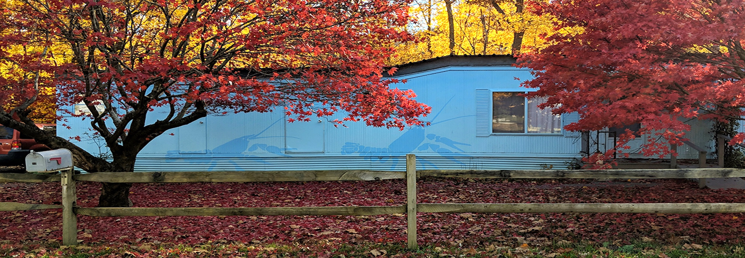 A mobile home trailer painted blue with murals of crawdads.